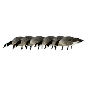 Appelants AXF LESSERS FEEDER PACK Outardes